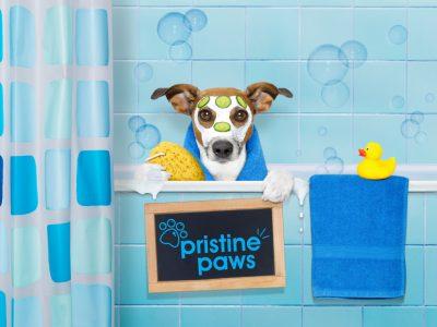 Website-Design-in-Stafford---Pristine-Paws-4