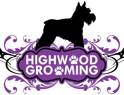 Dog grooming paradise!