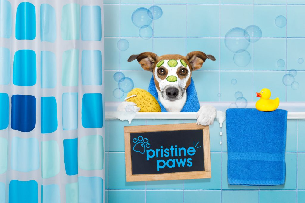Web Design for Dog Groomers